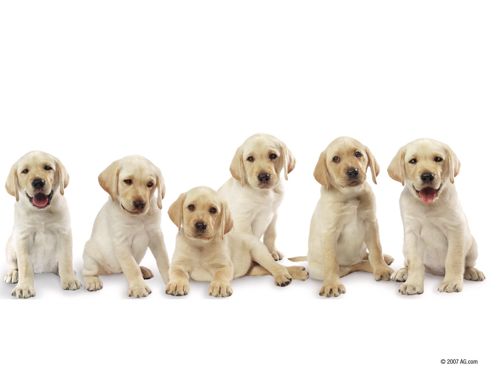 dogs aruba animal rights aruba